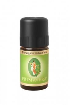 Primavera Eukalyptus radiata Australien bio