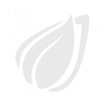 leguano sneaker blau, rot-weißer Bund